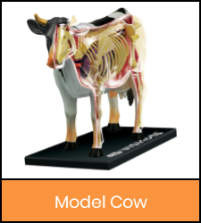Cow model image with orange frame that links to catalog record