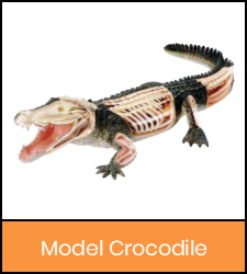 Crocodile model image with orange frame that links to catalog record
