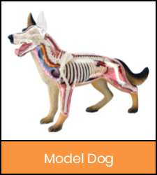 Dog model image with orange frame that links to catalog record