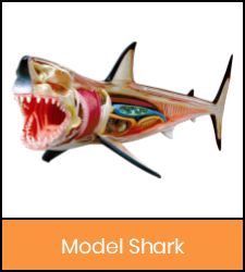 Shark model image with orange frame that links to catalog record