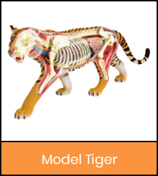 Tiger model image with orange frame that links to catalog record